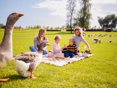 *** семейная природа солнце пикник гуси