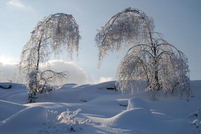 В ледяном наряде. зима деревья лед