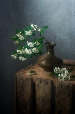 Белая невеста Натюрморт Спирея Белая невеста куст весна