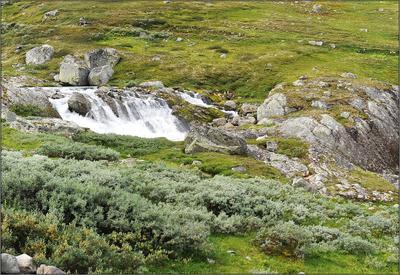 Пейзаж с овцой Норвегия