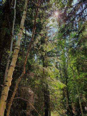 сибирь лес