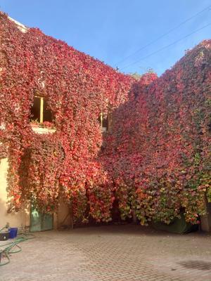 Краски осени в городе Осень