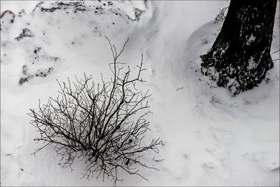 Зима снег зима кустик дерево