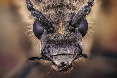макро портрет жук макро макропортрет супермакро