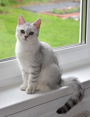 Степашка №10 коты