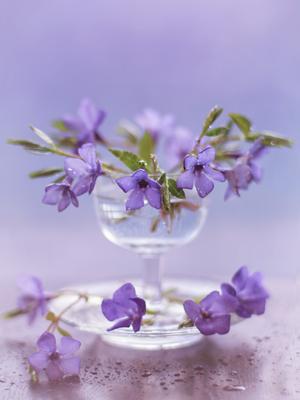 Цветы нам дарят настроение, И пробуждают вдохновение.... цветы натюрморт капли весна апрель