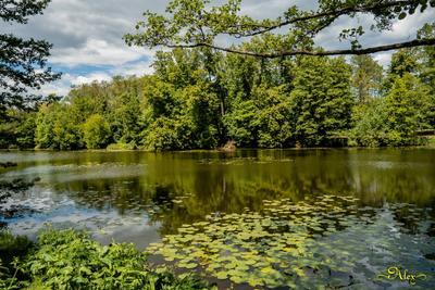 Природа Кузьминок природа пейзаж пруд вода лето парк Кузьминки