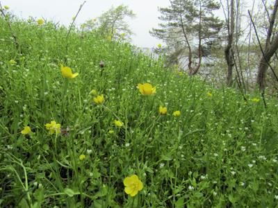 Весенние склоны Днепра.