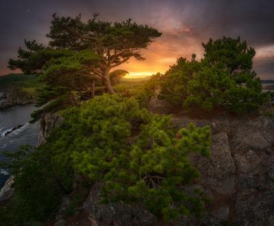 *** Реликтовые сосны Приморья *** приморский край море солнце рассвет владивосток заповедник скалы