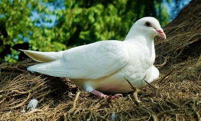 Кидайте в небо белых голубей, своих открытий, радостей, свершений, своих доброт, терпений и прощений- кидайте в небо белых голубей... Голубь