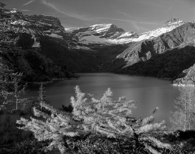 Маленькая лиственница и большое озеро Камера большой формат пейаж Альпы