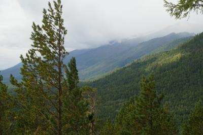Аршан Аршан горы лес осень
