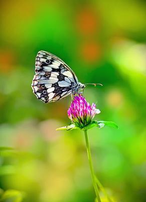 ... бабочка макро макрофото насекомые лето