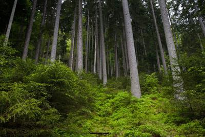 Bavarian forest Германия