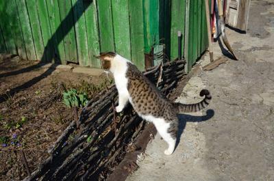 Опа, зацвели... кошка весна