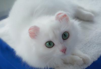 Муся- воплощение Муиззы кошка