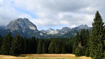 Дурмитор лес горы