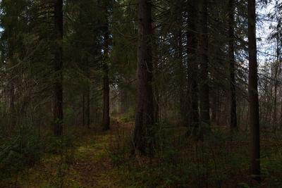 *** пейзаж лес тайга осень