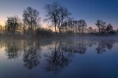 Просто деревья, вода и приятное утро утро озеро