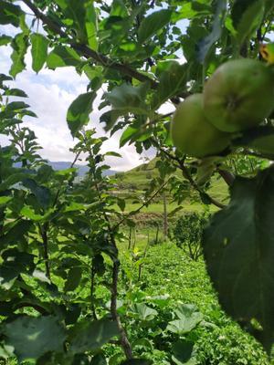 Насыщенный кадр природы Сад Природа Дагестан Изысканность