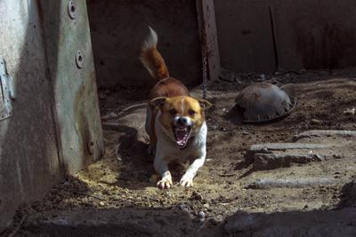 Злая собака!