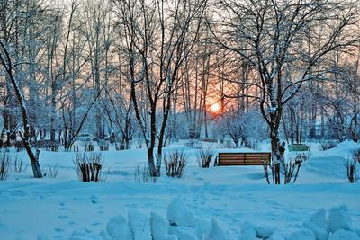 Зимний парк пейзаж