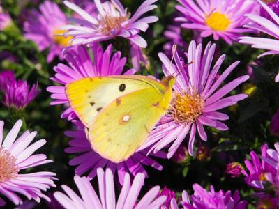 *** бабочка цветок природа осень