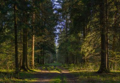 Утро в лесу лес утро солнце