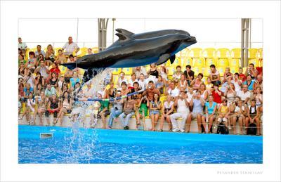 Парящие дельфин одесса море вода зритель