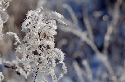 Фейерверк зима иней