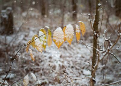 осень встречает зиму зима осень лес снег природа