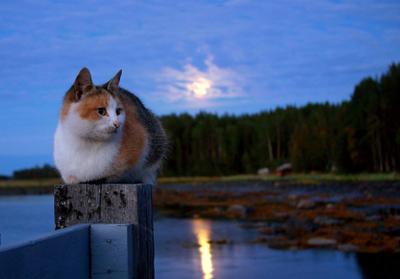 кошка, море и луна
