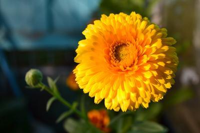 Цветы на балконе цветы