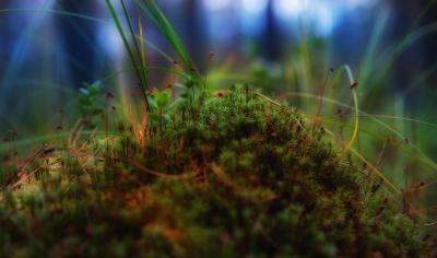 Мхи лес мох лето