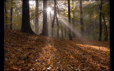 lights&shadows лес солнце свет утро