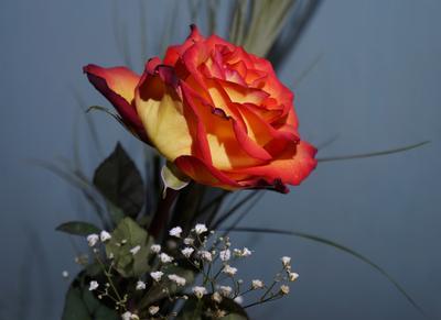 Неисчерпаемая, неповторимая цветы роза