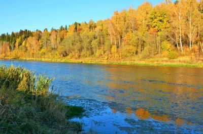 """""""Осень - рыжая кобыла, чешет гриву ,,,"""" осень река"""