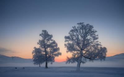 Стражи зимы алтай горный курайская степь кош-агачский район лиственницы мороз зима снег иней рассвет синий час