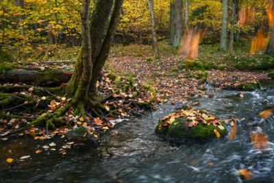 Речной листопад