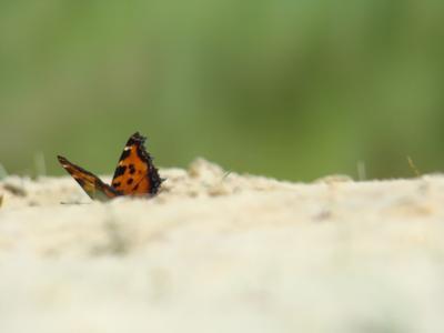 приземление бабочка