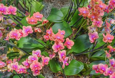Немного яркости на карантине Орхидеи