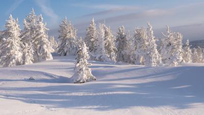 ...Солнечно- снежное настроение..