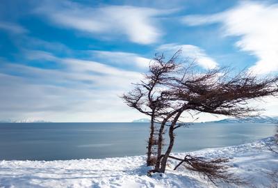 На севере диком стоит одиноко на голой вершине сосна...