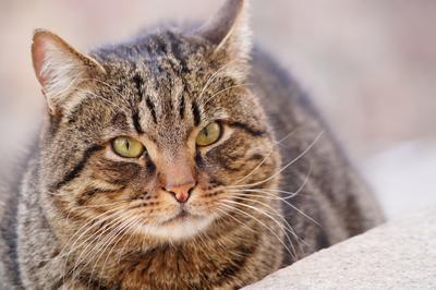 Житель двора Кот животное портрет животного дворовой уличный серый бездомный