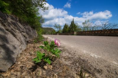 Сбежавший Лес дорога пейзаж Крым