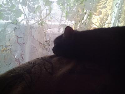 ***За окном дождик кошки
