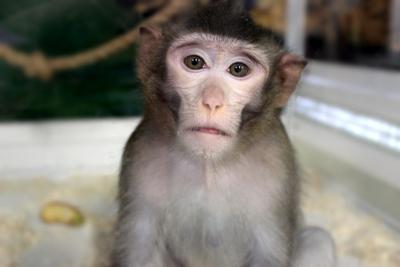 Взгляд обезьяна взор взгляд