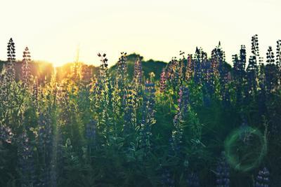 закат цветы закат поле
