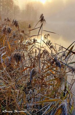 Камыши Осень туман озеро восход солнца камыши