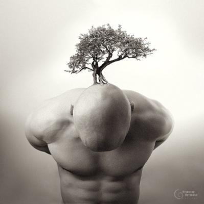 bonsai StanOd bonsai